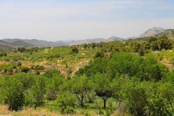 Uitzicht over de schitterende natuur van de Barranc de Furons bij Torremanzanas, een authentiek dorp in het achterland van de Costa Blanca