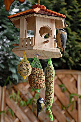 17 best images about bird houses on pinterest for Mesh feeder ideas