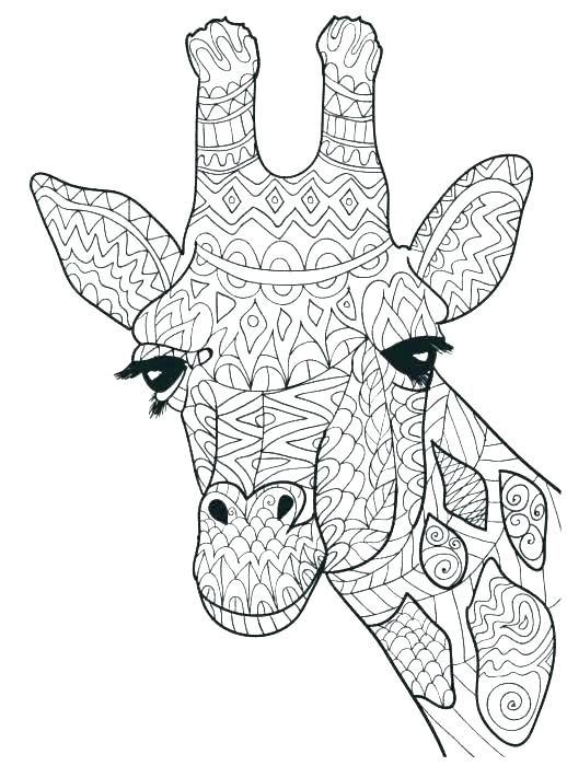 Cute Giraffe Coloring Pages Giraffe Coloring Pages Animal Coloring Pages Giraffe Colors