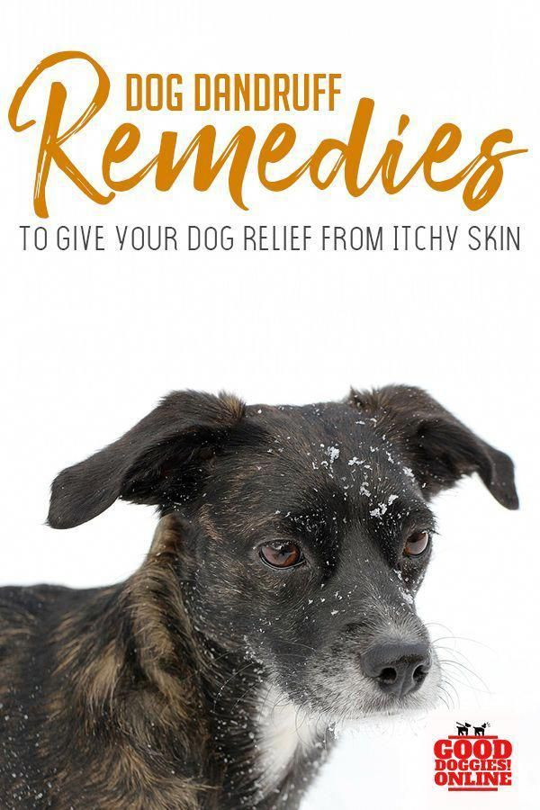 Dogs Get Dandruff Just Like People Do If Your Pup Suffers From Dog Dandruff Check Out These Remedies That Will Sto Dog Dandruff Dandruff Remedy Dog Skin Care