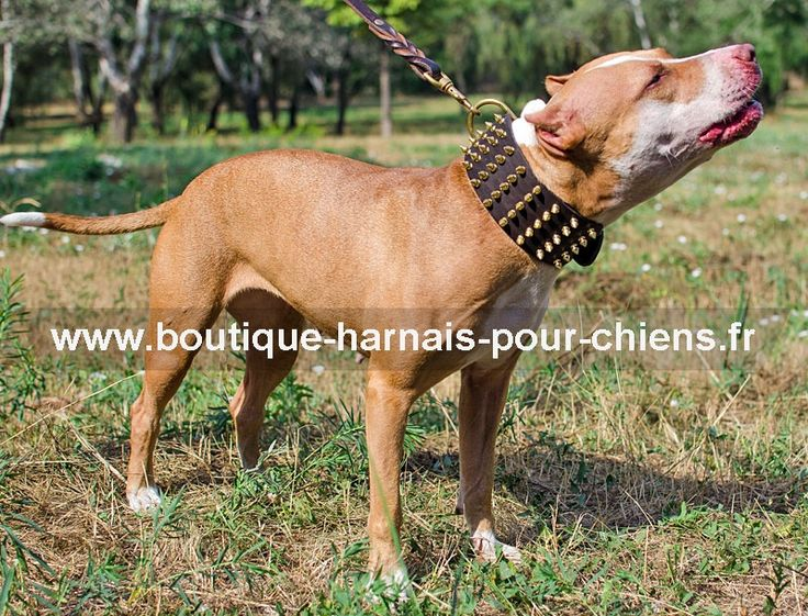collier#grand#chien Extra large collier clouté en cuir pour Pitbull ->  90,52 €
