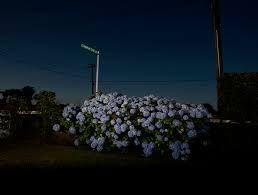 greta anderson photography - Google Search