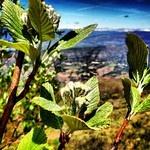 Flowers in #Montsec #Pallars #Catalunya mandongocat's Profile • Instagram