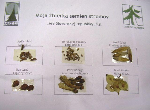 liečivé rastliny herbár - Hľadať Googlom