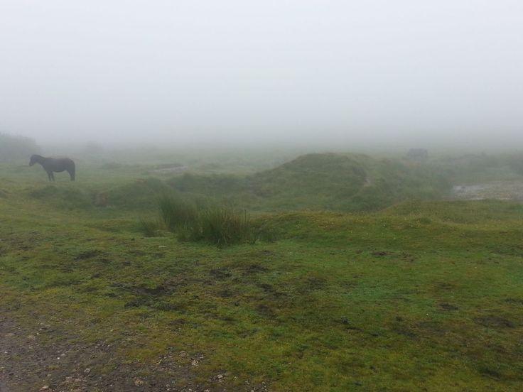 Dartmoor ... to zvíře v dálce není pes baskervillský