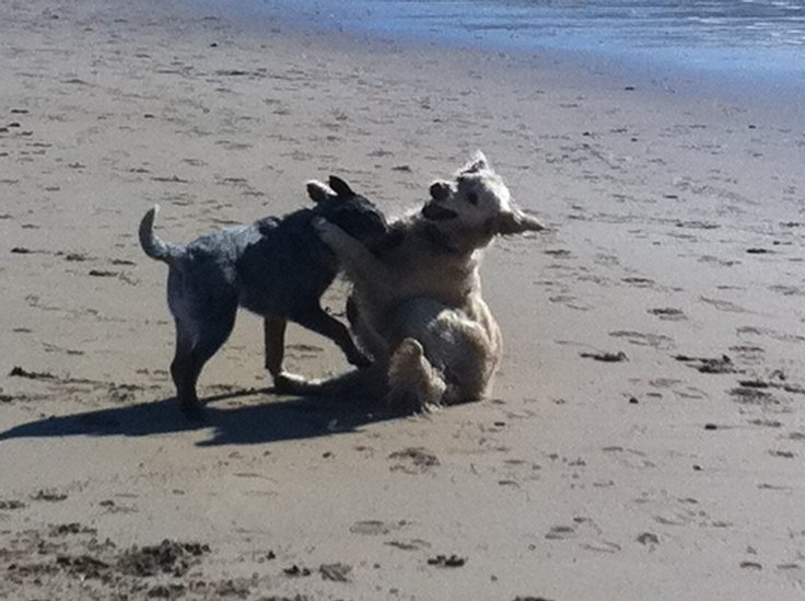More fun at the beach with Molly and friend!