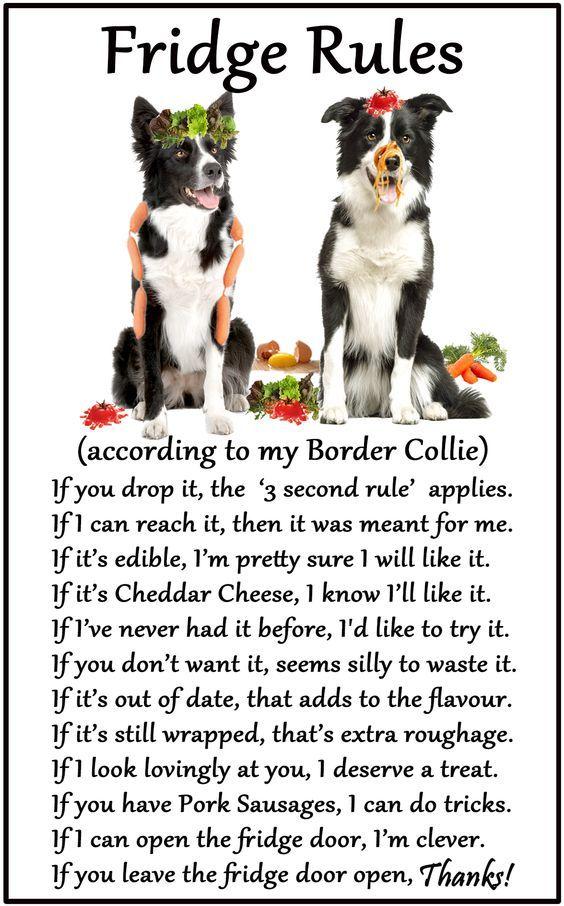 Border Collie Humorous Dog Fridge Rules. Size 6