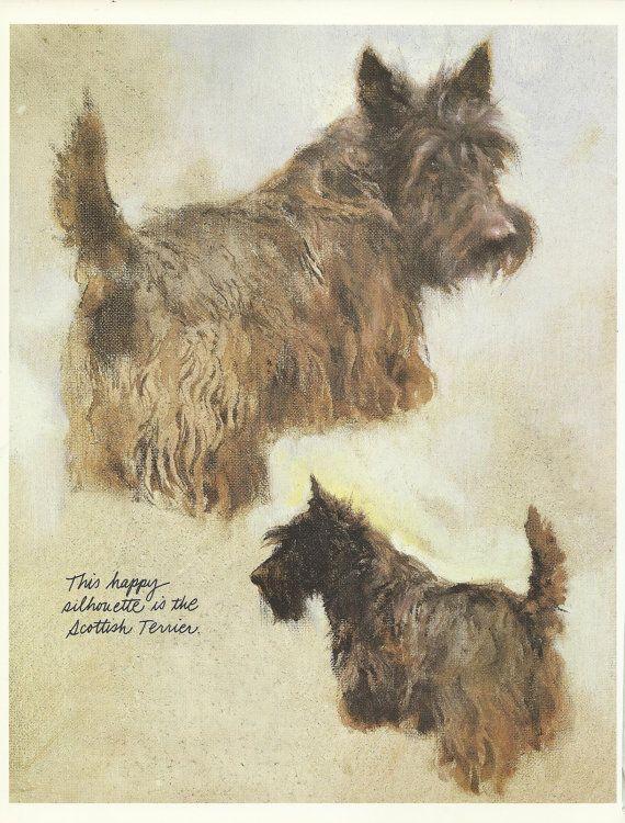 Scottish Terrier by Rien Poortvliet 1983 colour dog print Scottie