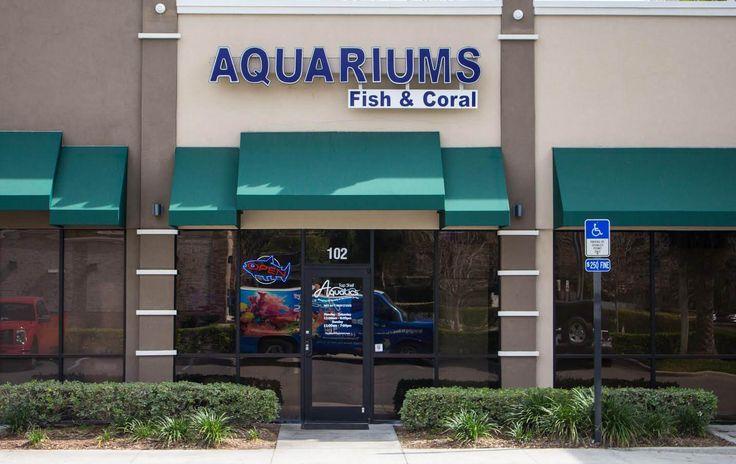 Live Corals for Sale Online Saltwater Aquarium Store in Orlando