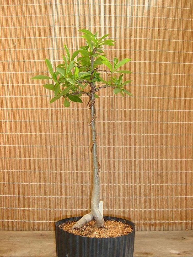how to make bonsai muck