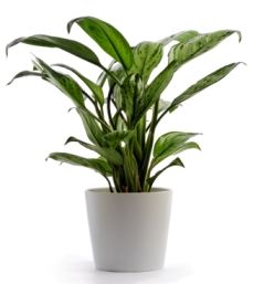 25 Trending Common House Plants Ideas On Pinterest