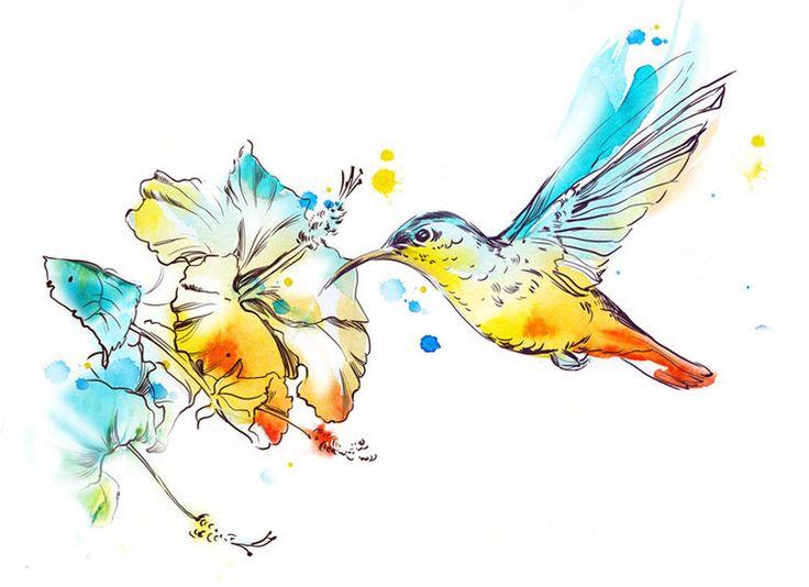 Картинки по запросу колибри рисунок