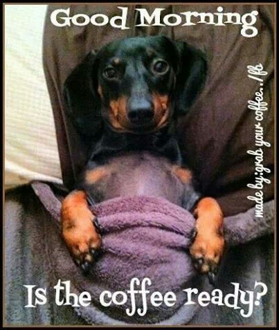 ♥ Who is making my coffee? www.ochomesbyjeff.com #wagaroo #ilovedogs #orangecountyrealtor