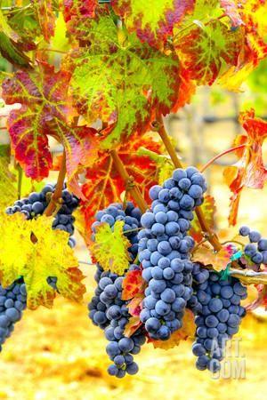 101 best Wine wall art images on Pinterest | Wine wall art, Art ...