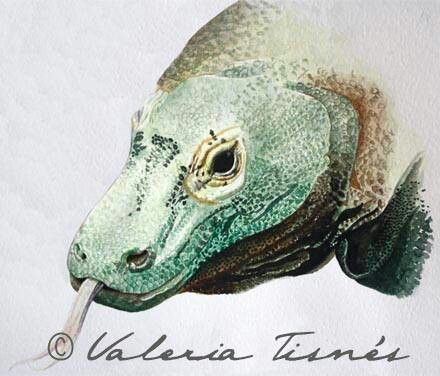 Dragon de komodo, acuarela. Watercolours