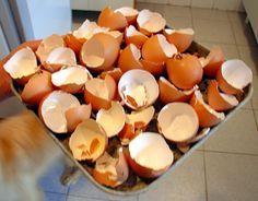 Adubos caseiro: Casca de ovo ( pó) Os ovos fornecem uma fonte rica em cálcio e potássio. Dão um fantástico adubo caseiro. Secar as cascas e esmaga-las até fazer pó (c/ o almofariz).Depois é só aplicar o pó no substrato, ou na terra em volta da planta. A medida é de 5 cascas de ovo por cada planta.  Casca de ovo (liquido) - Ferva 20 cascas em 3 l de água durante alguns minutos, deixe as cascas em infusão por 8 horas. Deixe arrefecer, retire as casas de ovo, guarde no frigorífico.