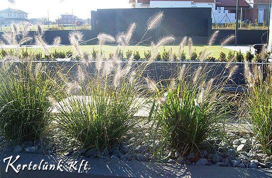 Cikkünkben a modern kertek népszerű, fás és lágyszárú növényeit, fűféléit mutatjuk be.