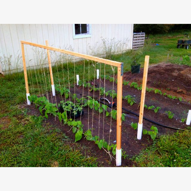 Green bean trellis made easy   2 inch PVC pipe hammered in the ground for support. (about 20 inches each) 9-10 inches above ground.   2x2x8 boards cut at 4 ft for ends and one 8 ft piece for top.   String one piece of twine across base of  pipe. Then individually tie twine on cross beam down to bottom string.   Green beans will grow up twine naturally.   At end of season twine can be recycled for next year or put in compost.   PVC is sturdy enough to get plenty of years of use.   DON'T USE…