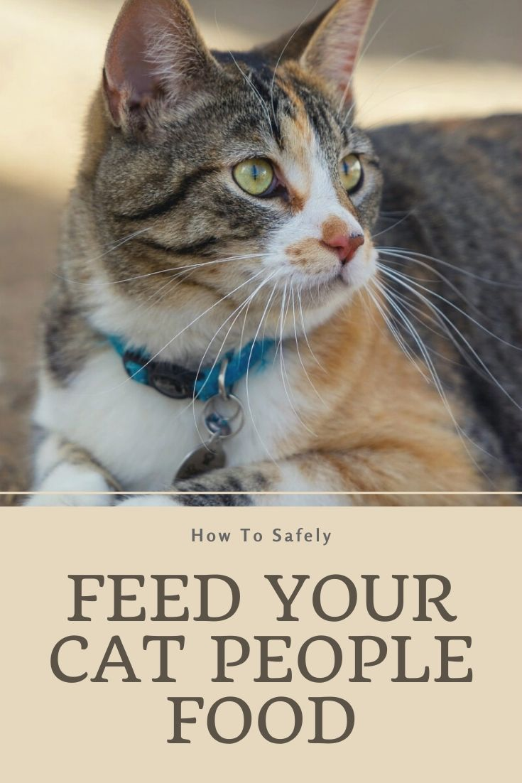 How To Safely Feed Your Cat People Food Other People S Pets In 2020 Cat People People Food Wellness Cat Food