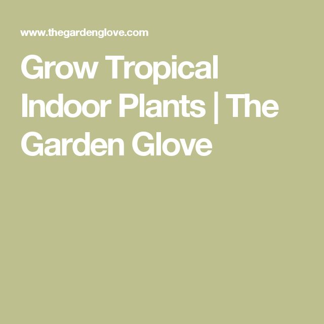 Grow Tropical Indoor Plants | The Garden Glove
