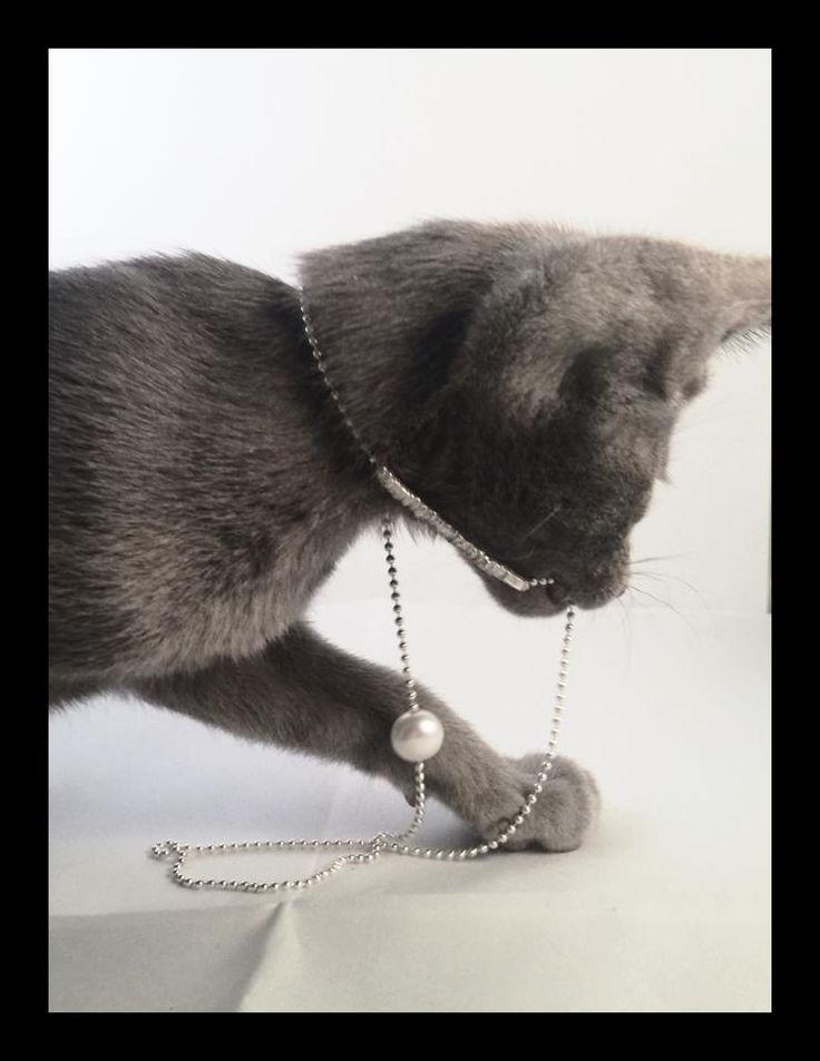 WURMA Jewellery and oriental kitten from Asynjas Cattery.
