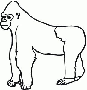 free animals gorilla printable colouring pages for preschool silverback - Silverback Gorilla Coloring Pages