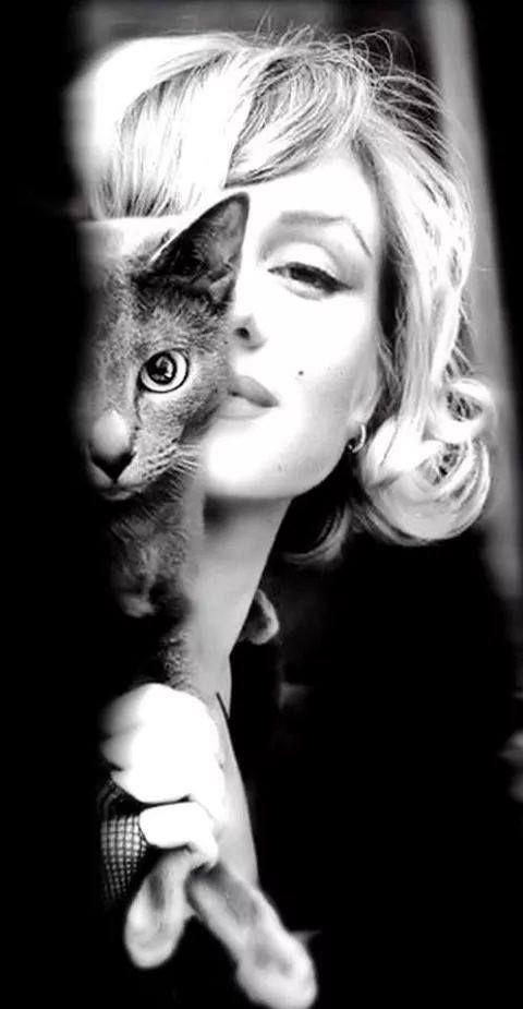 Cat Marilyn #cat #marilyn #sexy