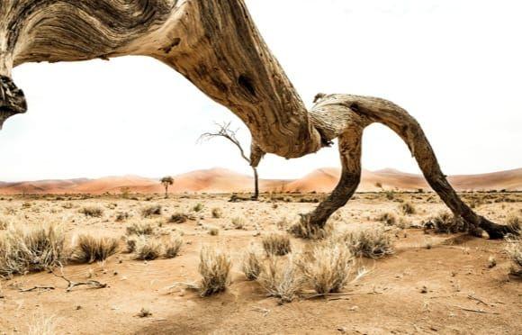 Nambia - David Lazarus / Cape Town Photographer