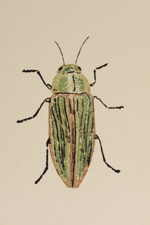 Beautful bug prints made by my sister in law Katie Doyle. A hand pulled screen print of a Golden Buprestid Beetle. The dimensions of this print are 4 x 5 inches and it is covered by a cream colored 8x10 custom mat and backing board.