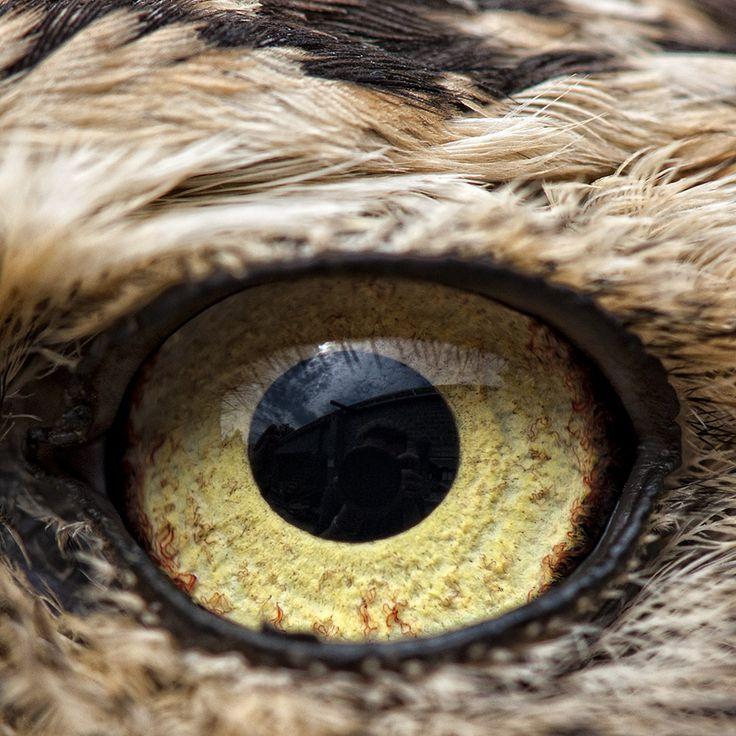 Best Animals Eyes Images On Pinterest Eyes Wildlife And Animal - 24 detailed close ups of animal eyes