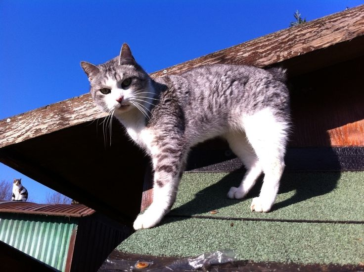 Gatti, gli ospiti della colonia felina Megghy di Bosco di Scandiano
