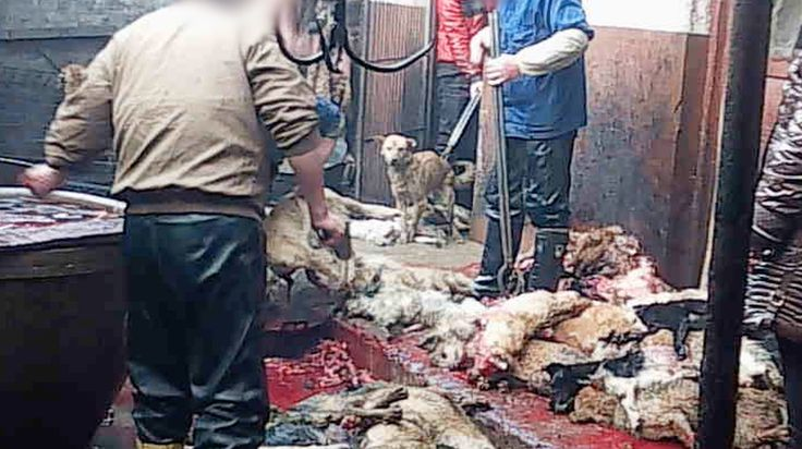 The world is watching in horror as thousands of dogs and cats are bludgeoned and killed. Take action.