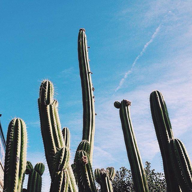 Cactus love!!! #vscocam #abmlifeiscolorful #vsconature #sweetdreamsdlf #nature #cactus #dscolor #barcelona #spring
