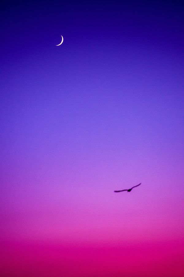drxgonfly:  Fly Me To The Moon (by Masis Usenmez)