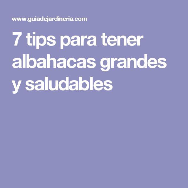 7 tips para tener albahacas grandes y saludables