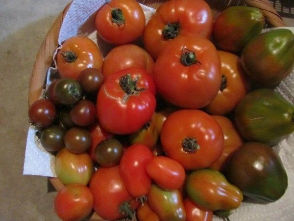 Edible Garden Newsletter September 2017 Repost -  The Edible Garden Newsletter September 2017 features an article that evaluates the favourite Heritage Tomatoes of the eighty the author has grown over the past 15 years. She discusses tomato terminology and describes the history behind that particular tomato. Bees are all the buzz in Horticultural circles and this month we describe various ways you can get your garden Bee Certified. Finally an article on the Legacy of the Three Sisters.