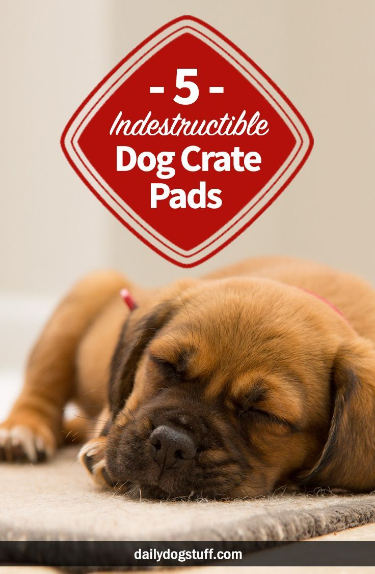 5 Best Indestructible Dog Crate Pads & Beds for Heavy
