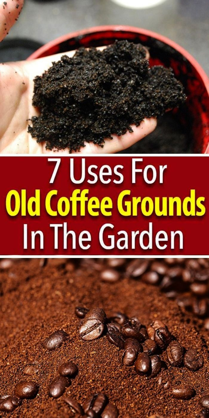 Coffeegroundsinthgarden Coffeegroundsuses Oldcoffeegrounds Essential Potassium Nitrogen Elements Uses For Coffee Grounds Coffee Grounds Plant Benefits