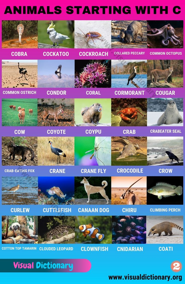 Animals That Start With C Useful List Of 60 Animals Starting With C Visual Dictionary Animals Name In English Visual Dictionary Animals