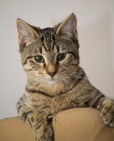 RSPCA NSW adoption promotion (With images) Someone to