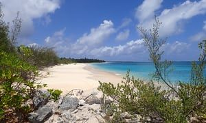 Bikini Island where researchers discovered a diverse eco-system with coral 'as big as cars'.
