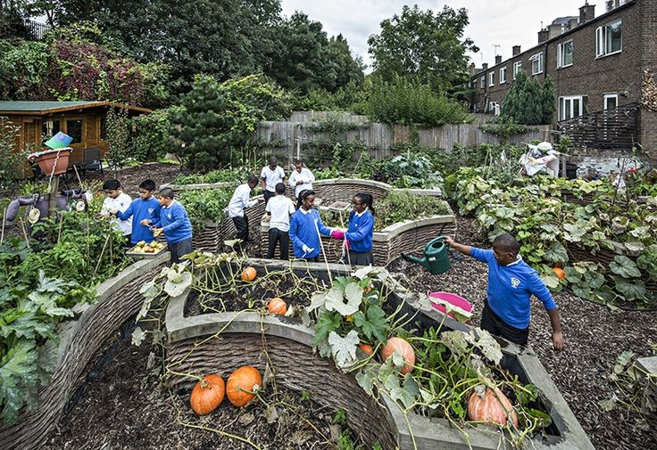 Christ Church primary allotment Ilford London