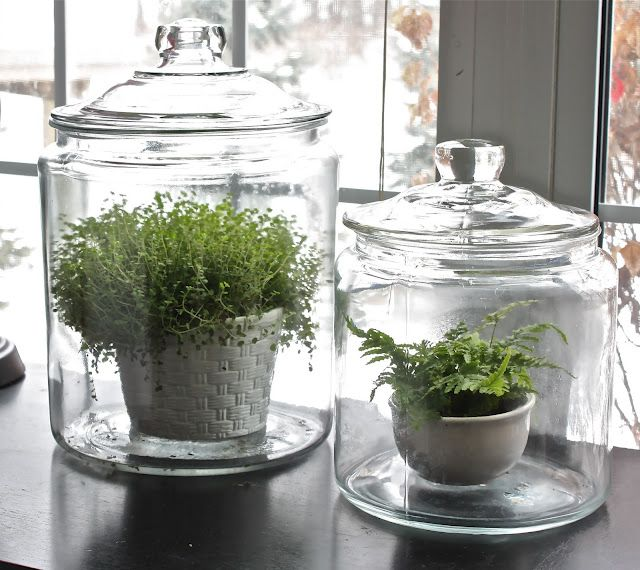 The Yellow Cape Cod Blog: Winter Garden. This is a great idea since my cats eat any fresh plants or flowers I keep in the house. Why didn't I think of this?? Thank you!