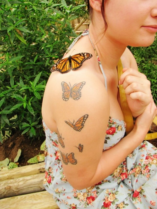 This Monarch butterfly seems attracted to the Monarch tattoos! #monarch #butterfly #tatoo