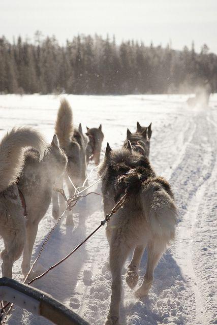 Husky safari in Olos, Finland by Visit Finland, via Flickr Cabins in Saariselkä http://www.saariselka.com