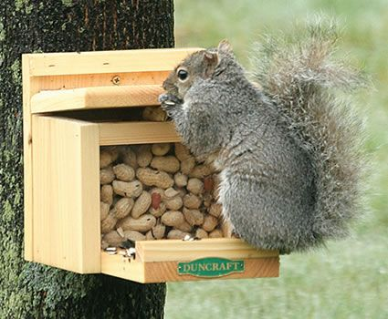 Pandora's Box keeps out birds and gives squirrels a feeder all their own.    Naturally inquisitive, the agile squirrel will lift the lid on Padora's Box, take out a single peanut, then the lid closes automatically. He'll do this again and again for hours to everyone's pleasure.     Constructed of sturdy New England White Pine – weathers beautifully. Includes pre-drilled holes for mounting. Holds 1 pound. 8 inches tall, 11 inches long, 7 inches wide.