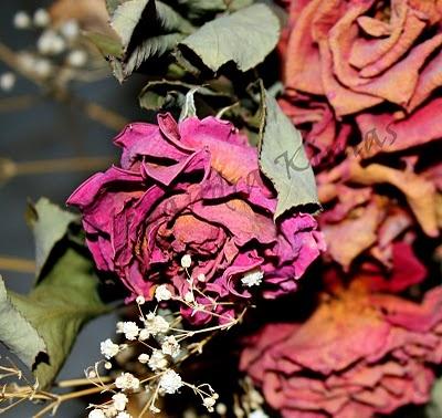 Alexandra Kinias Photography: Flowers