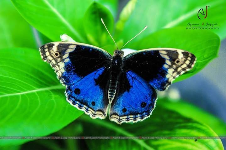God's Creations .. !!