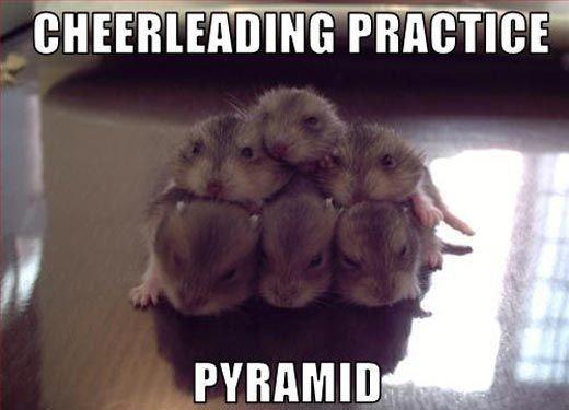 Hamster pyramid...