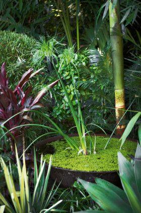 Bali garden makeover image 8